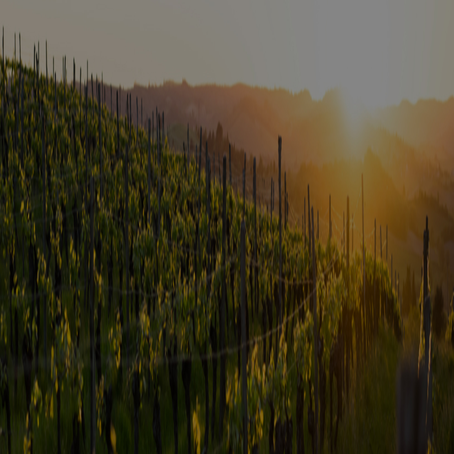 Domaine Combier